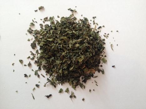 Ortiga-verde-Urtica -dioica